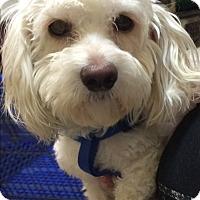Adopt A Pet :: Dougie - Thousand Oaks, CA