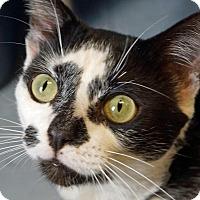 Adopt A Pet :: Dawson - Sprakers, NY