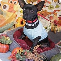 Adopt A Pet :: Dude - Houston, TX