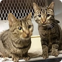 Adopt A Pet :: Lois - Concord, OH