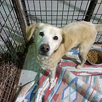 Adopt A Pet :: HONEY! - Owenboro, KY
