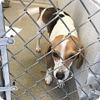Adopt A Pet :: Candy - Aurora, IL