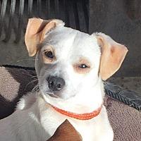 Adopt A Pet :: Kevin - San Francisco, CA