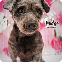 Adopt A Pet :: Pudge - San Antonio, TX