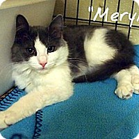 Adopt A Pet :: Meryl - Ocean City, NJ