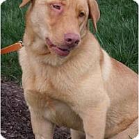 Adopt A Pet :: Gunter - Lewisville, IN