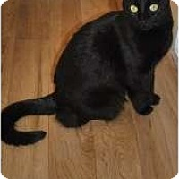 Adopt A Pet :: Shadow - Prescott, AZ