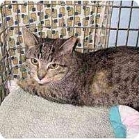 Adopt A Pet :: Delores - Lombard, IL
