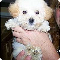 Adopt A Pet :: Peaches - Antioch, IL