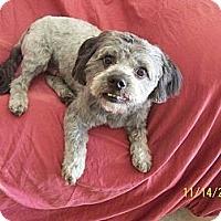 Adopt A Pet :: Cody - Scottsdale, AZ