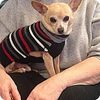 Adopt A Pet :: Jorge - Homewood, AL