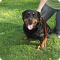 Adopt A Pet :: Lucy - Hilliard, OH