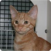 Adopt A Pet :: Basil - Frederick, MD