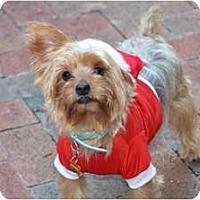 Adopt A Pet :: Logan - Miami, FL