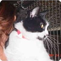 Adopt A Pet :: Athena - Pendleton, OR