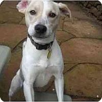 Adopt A Pet :: Bessie - San Francisco, CA