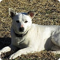 Adopt A Pet :: BETHANY(part of a bonded pair) - Leland, MS