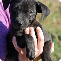 Adopt A Pet :: Zane - Adoption Pending - Derry, NH