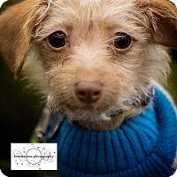 Adopt A Pet :: Marshall - Minneapolis, MN