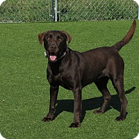 Adopt A Pet :: Suzie - Meridian, ID