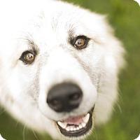 Adopt A Pet :: Hondo  Adopted - Tulsa, OK