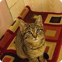 Adopt A Pet :: Constantine - Whitestone, NY