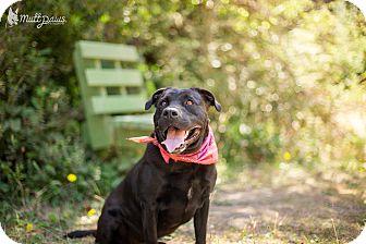 Labrador Retriever Mix Dog for adoption in Portland, Oregon - Mary Anne