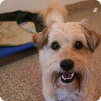 Adopt A Pet :: Bernie - Adoption Pending - Gig Harbor, WA