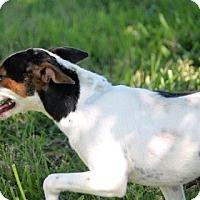 Adopt A Pet :: Crybaby - Houston, TX