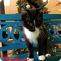 Adopt A Pet :: Peter - Gadsden, AL