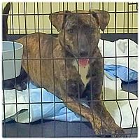 Adopt A Pet :: Zena - Powder Springs, GA