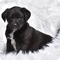 Adopt A Pet :: Rolfe - Groton, MA