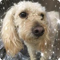 Adopt A Pet :: Garett - IL - Tulsa, OK