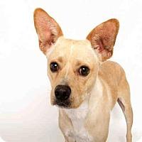 Adopt A Pet :: T-BONE - Murray, UT