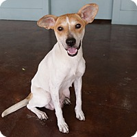 Adopt A Pet :: Wilma - San Antonio, TX