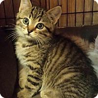 Adopt A Pet :: Freddy - Jeannette, PA