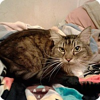Adopt A Pet :: Sheila Courtesy Post - Absecon, NJ