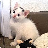 Adopt A Pet :: Pippin - Lathrop, CA