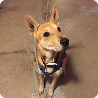 Adopt A Pet :: Rocky - Traverse City, MI