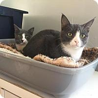 Adopt A Pet :: Reynard - Hampton, VA
