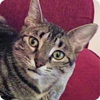 Adopt A Pet :: Phoenix - St.Ann, MO