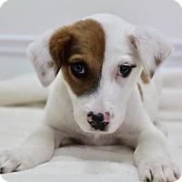 Adopt A Pet :: Soda - Picayune, MS