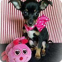Adopt A Pet :: Carly - Troutville, VA