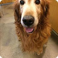 Adopt A Pet :: Jai - Maple Ridge, BC