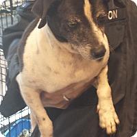 Adopt A Pet :: Detector - Westminster, CA