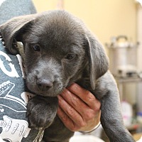 Adopt A Pet :: Cherry Vanilla~adopted! - Glastonbury, CT