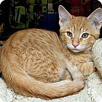 Adopt A Pet :: Tyson S - Sacramento, CA