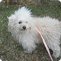 Adopt A Pet :: Paris - Wellington, OH