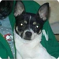 Adopt A Pet :: Chanel - Johnsburg, IL