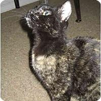 Adopt A Pet :: Dolores - Davis, CA